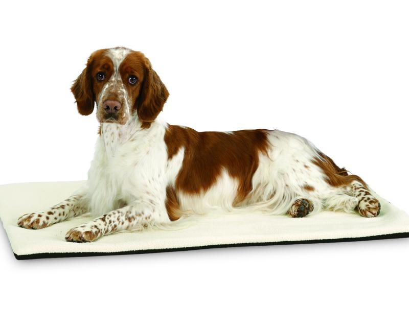 Tinker Welsh springer puppies